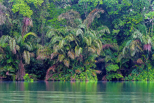 Costa Rica River Shore by Jackson Ball