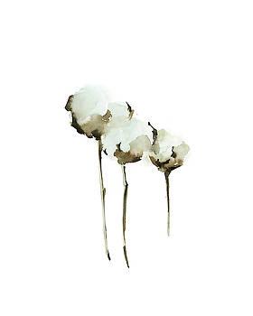 Cotton Blossom by Sophia Rodionov