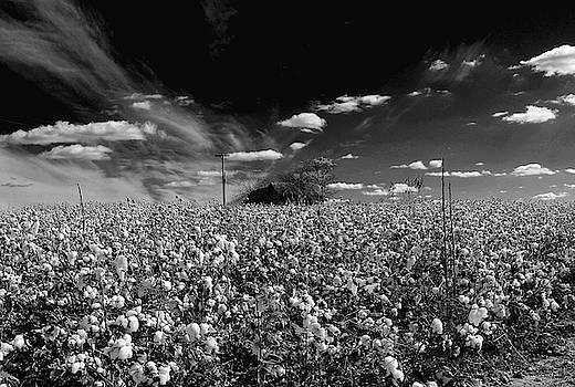 Cotton field and cotton clouds by Andy Lawless