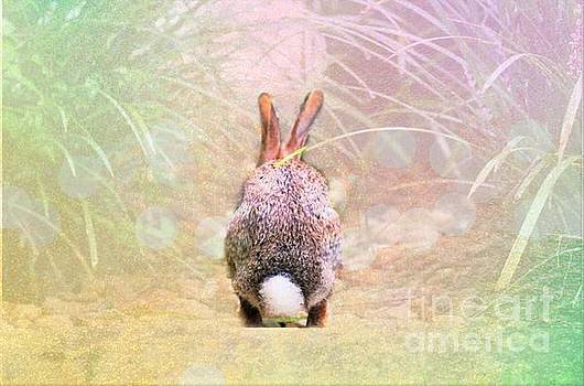 Diann Fisher - Cottontail On The Move