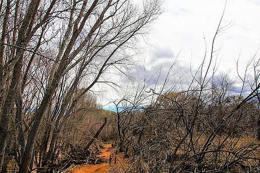 Cottonwood Arizona Jail Trail trees path sky clouds 5229 by David Frederick