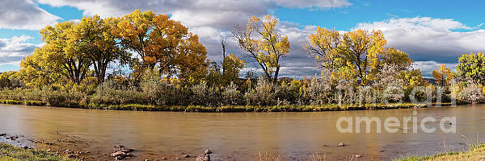 Cottonwoods shining in the Sun Along the Rio Chama in Abiquiu - Rio Arriba County New Mexico by Silvio Ligutti