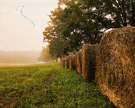 Country Morning Mist by Mark Guinn