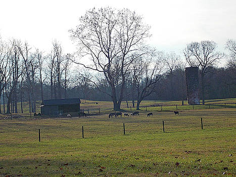 Country Pasture by Matthew Seufer