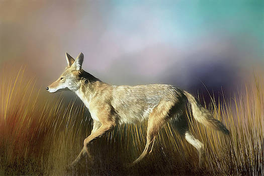 Coyote on the Move by Donna Kennedy