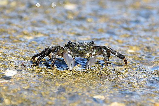 Fraida Gutovich - Crab On The Rocks