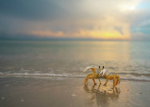 Crabby Beach by Joey Waves