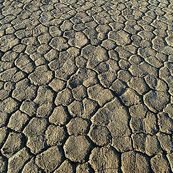 William Dickman - Cracked Earth I