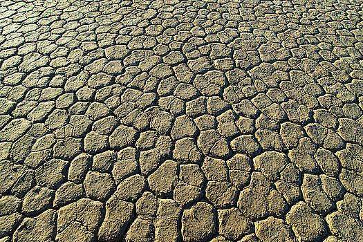 William Dickman - Cracked Earth II
