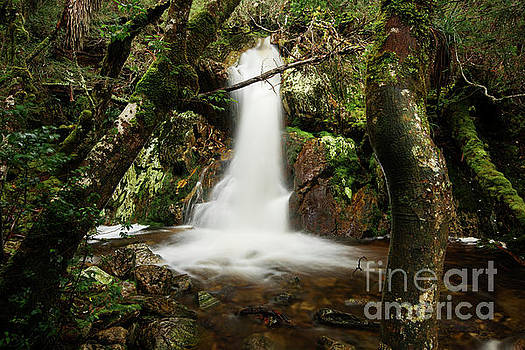 Crater Falls in Cradle Mountain by Rob D