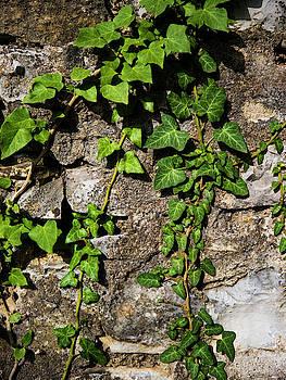 Crawling Ivy by Rae Tucker