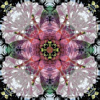 Creation by Naida Ginnane