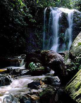 Creek in tropical rainforest by Eugenio Opitz