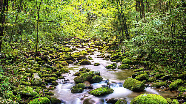 Creek Running Through Roaring Fork in Smoky Mountains by Susan Schmitz