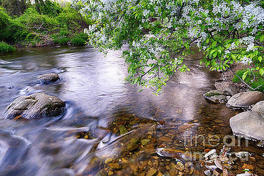 Creek with a Blooming Tree by George Oze
