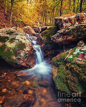 Creekbed Foliage by Eric J Carter