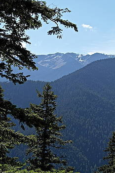Crest of Olympic Mountains by Michele Myers