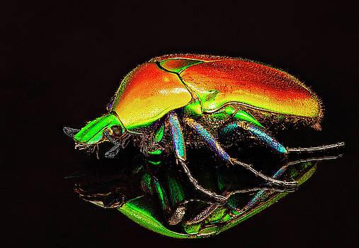Crimson Garden Beetle 2 by Gary Shepard
