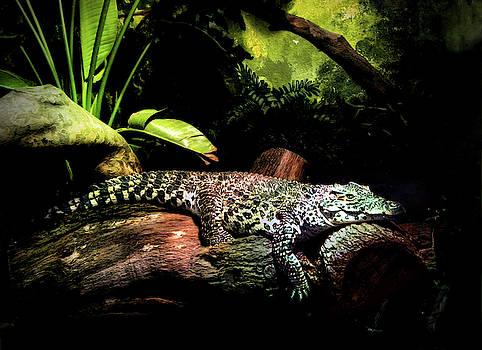 Crocodile  by Savannah Gibbs
