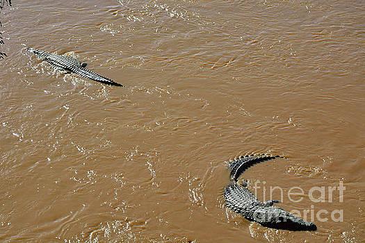 Crocodile's Back by Morris Keyonzo