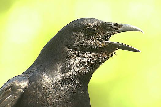 Crow Bar by Eagle Finegan