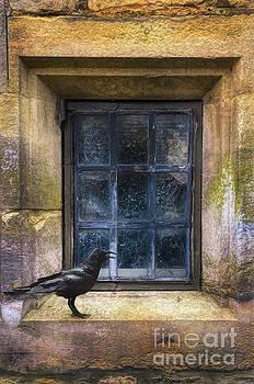 Crow on the Windowsill by Jill Battaglia