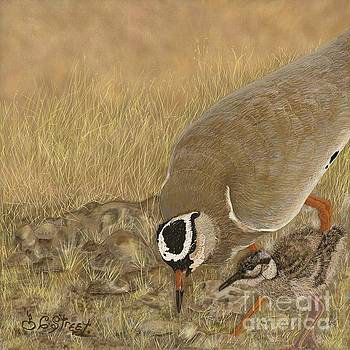 Crowned Plover and Chick by Caroline Street