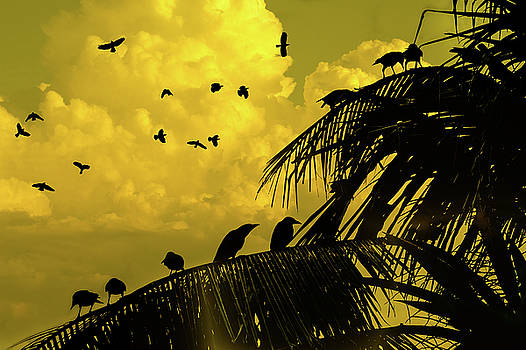Crows In Kandawgyi Park by Chris Lord