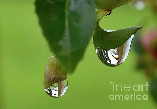 Cindy Treger - Crystal Raindrops With Scene Inside