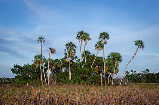 Crystal River Palms by Mike O'Shell