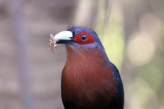 Cuckoo For Crickets by Jennifer Robin