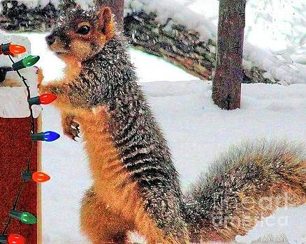 Curious Squirrel by Janette Boyd