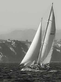 Cliff Wassmann - Curlew off Dana Point Bluffs