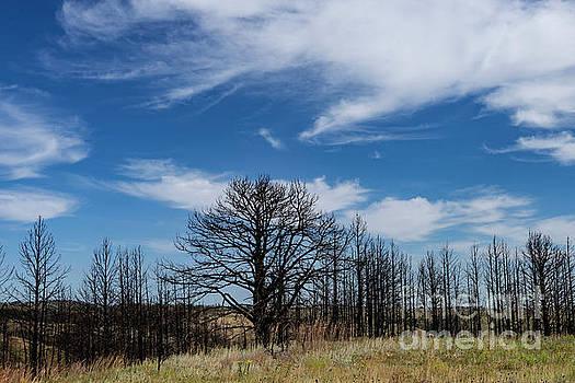 Custer State Park by Carol Bilodeau