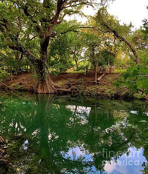 Felipe Adan Lerma - Cypress Creek Mid Afternoon Mid October 1 of 3