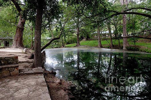 Felipe Adan Lerma - Cypress Creek Mid Afternoon Mid October 3 of 3