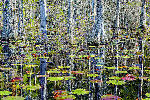 Cypress Swamp Lily Pads by Jackson Ball