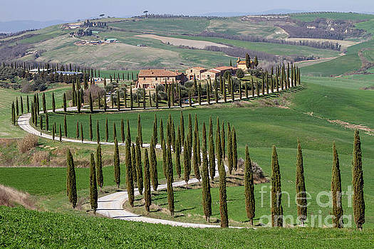 Helga Koehrer-Wagner - Cypress Tree Alley in Tuscany-4