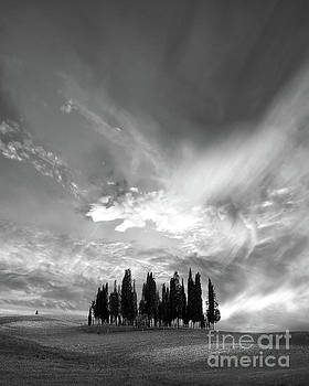 Cypress trees black and white by Delphimages Photo Creations