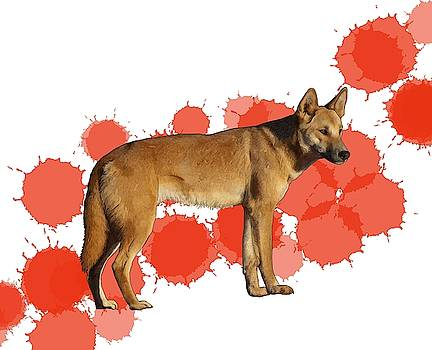 D is for Dingo by Joan Stratton