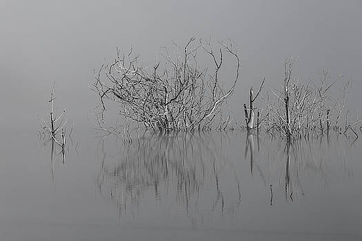D1093 - Theewaterskloof Trees by Dawid Theron