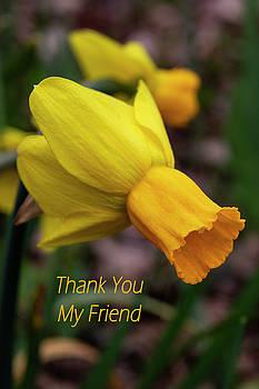 Daffodil Thank You by Norma Brandsberg