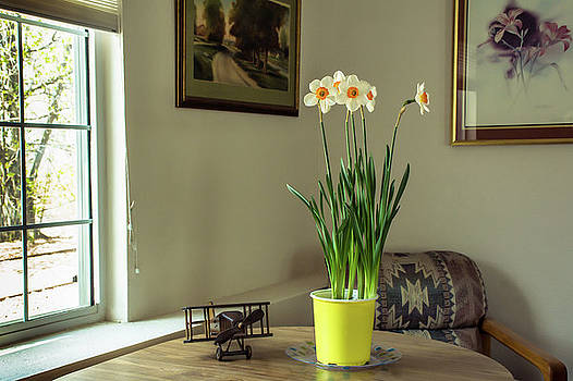 Daffodils - Yellow Trumpets Of Spring by John Bartelt