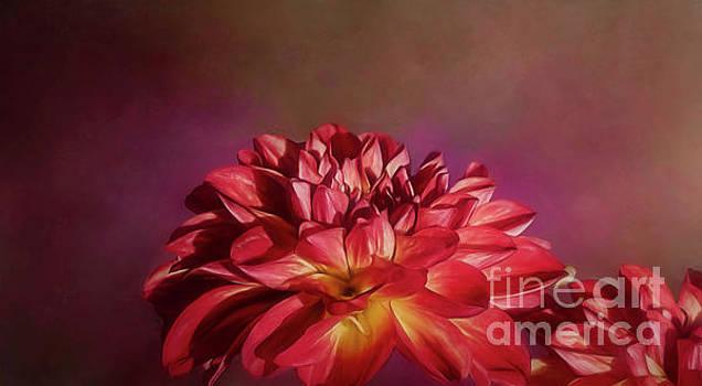 Dahlia Beauty by Warrena J Barnerd