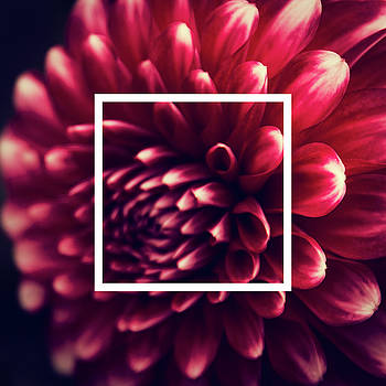 Dahlia Flower Design by Dirk Wuestenhagen