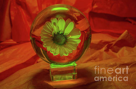 Daisy Ball by Linda Howes
