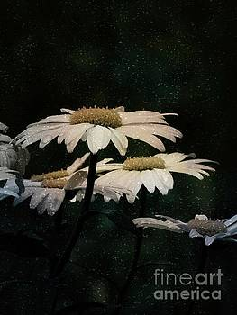 Daisy Flower Box Garden  by Ella Kaye Dickey