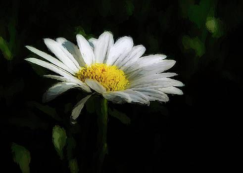 Daisy Isabel by Ernie Echols