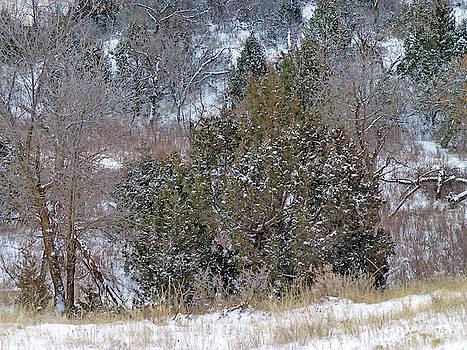 Dakota West in Winter by Cris Fulton