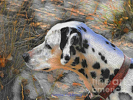 Dalmatian dog by Annie Gibbons